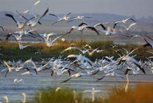 Giornata mondiale delle zone umide