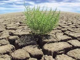 Giornata mondiale per combattere la desertificazione e alla siccità