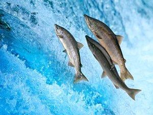 Giornata mondiale della migrazione dei pesci