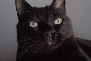 Giornata internazionale del Gatto Nero