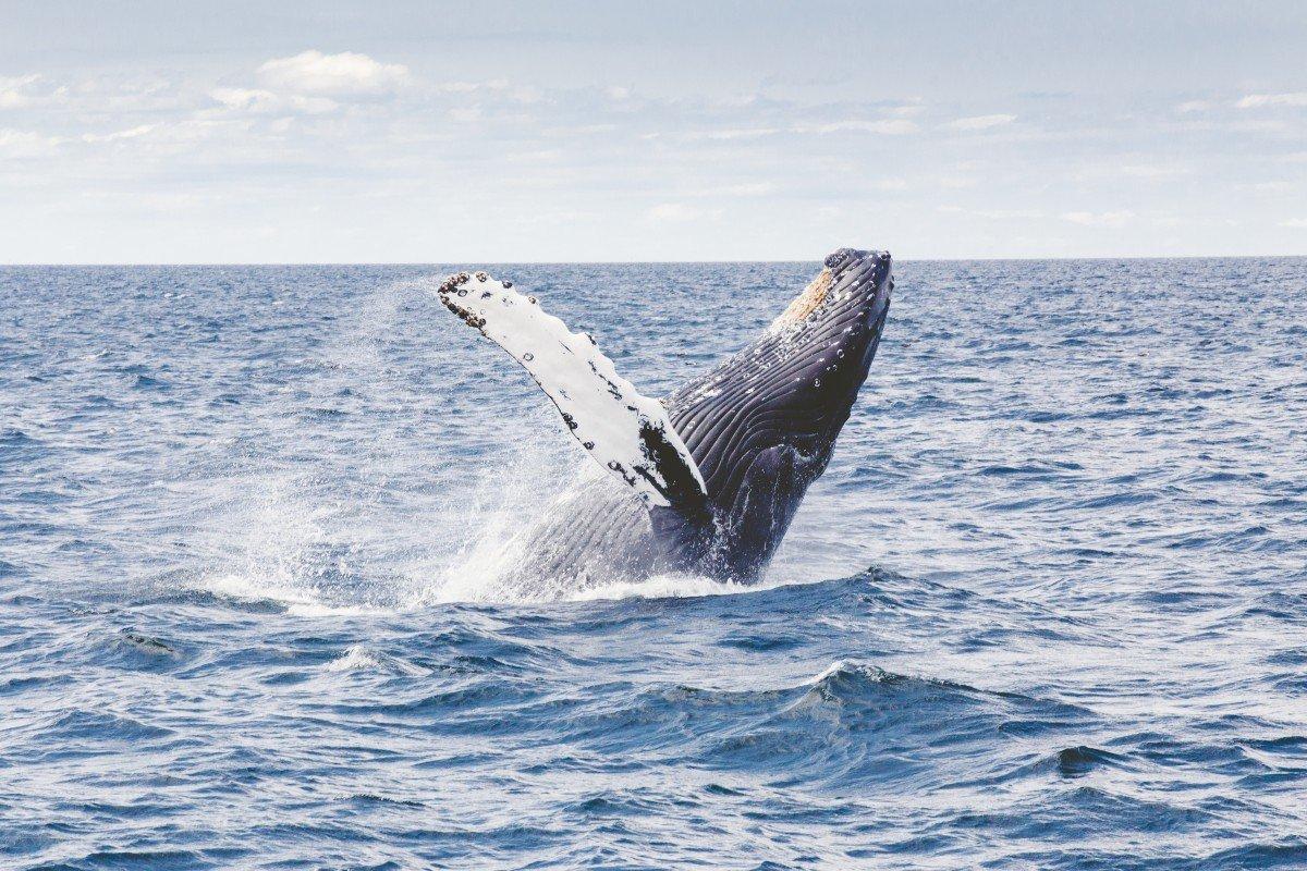 delle-balene