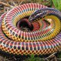 giornata mondiale dei serpenti